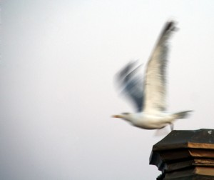 The promise of Google+ captured in a seagull's flight